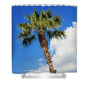 Florida State Tree Shower Curtain