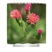 Florida Tasselflower Shower Curtain
