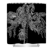 Florida Thatch Palm In Black And White Shower Curtain