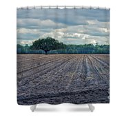 Florida Tree Shower Curtain