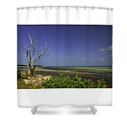Florida Tree Shower Curtain