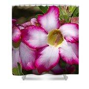 Flower 12 Pink White Yellow Shower Curtain