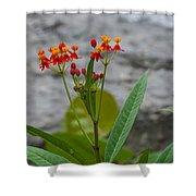 Flower 13 Shower Curtain