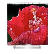 Flower 30f, Ny, 16 Shower Curtain