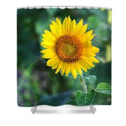 Flower #43 Shower Curtain