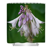 Flower 5 Shower Curtain