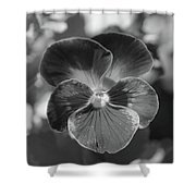 Flower 5 - Black And White Shower Curtain