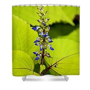 Flower 6 Shower Curtain