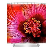 Flower 69f Shower Curtain