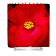 Flower 8 Enhanced Shower Curtain
