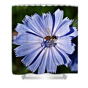 Flower And Bee 2 Shower Curtain