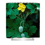 Flower And Fruit Shower Curtain