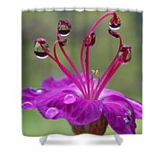 Flower And Raindrops Shower Curtain