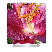 Flower Art Prints Pink Orange Lily Flower Giclee Baslee Troutman Shower Curtain