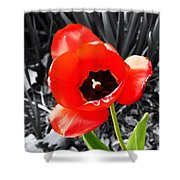 Flower As Art Shower Curtain