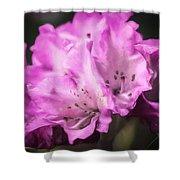 Flower Beauty Shower Curtain
