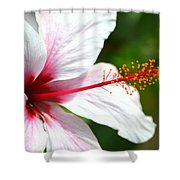 Flower Beauty Shower Curtain by Riad Belhimer