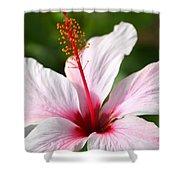 Flower Beauty2 Shower Curtain