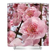 Flower Blossoms Art Spring Trees Pink Blossom Baslee Troutman Shower Curtain