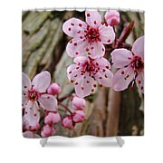 Flower Blossoms Pink Tree Blossoms Art Print Giclee Spring Flowers Shower Curtain