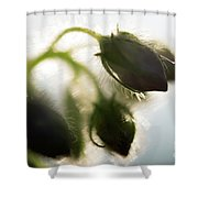 Flower Buds Abstract Shower Curtain