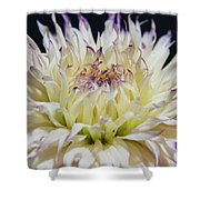 Flower Dahlia. Macro Shower Curtain