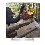 Flower Delivery By Trunk Shower Curtain