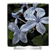 Flower Droplets Shower Curtain