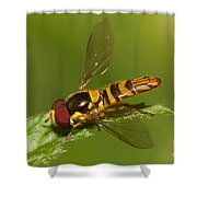 Flower Fly Allograpta Obliqua Shower Curtain