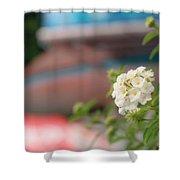 Flower Grow Shower Curtain