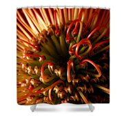 Flower Hawaiian Protea Shower Curtain