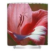 Flower In Pink Pastel Shower Curtain