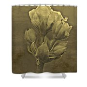 Flower In Sepia Shower Curtain