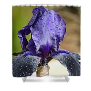 Flower In The Rain At Chelsea Shower Curtain