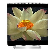 Flower In The Rain Shower Curtain