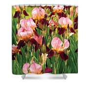 Flower - Iris - Gy Morrison Shower Curtain