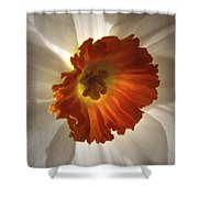 Flower Narcissus Shower Curtain
