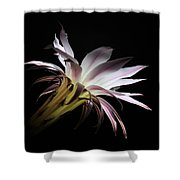 Flower Of Cactus Shower Curtain