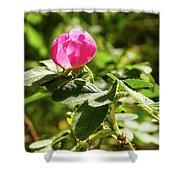 Flower Of Eglantine - 2 Shower Curtain