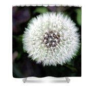 Flower Of Flash Shower Curtain