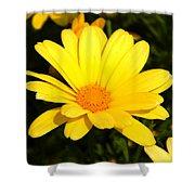 Flower Of Sunshine Shower Curtain