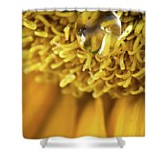 Flower Of The Sun Shower Curtain