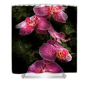 Flower - Orchid - Phalaenopsis - The Cluster Shower Curtain