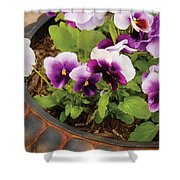 Flower - Pansy - Purple Pansies Shower Curtain