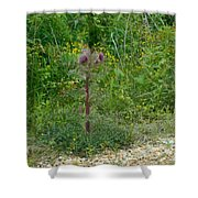 Flower Photograph00 Shower Curtain