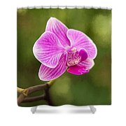 Flower - Pink Orchids Shower Curtain