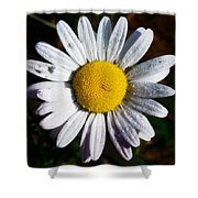 Flower Power Shower Curtain by Bill Cannon