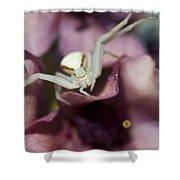Flower Spider Shower Curtain