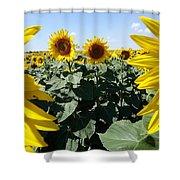 Flower Sunflower,yellow Flower, Shower Curtain