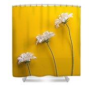flower, white, three, online, Yellow Background, lateral, vertic Shower Curtain